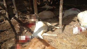 Kırkağaç'ta yıldırım düştü çok sayıda hayvan telef oldu