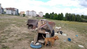 Kütahya'da tehlike arz eden yasaklı 5 köpeğe el konuldu