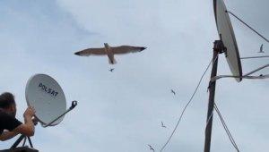 Martılar anten tamircisini çatıda rahat bırakmadı - Bursa Haberleri