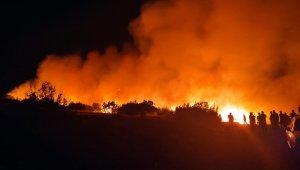 Nizip'te orman yangını
