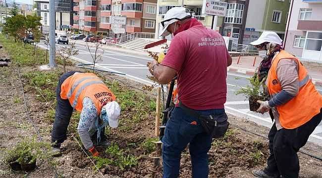 Orta refüjlerde bitki ve ağaçlandırma çalışması