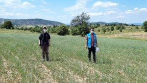Şaphane'de ekili alanlarda kuraklık kontrolleri