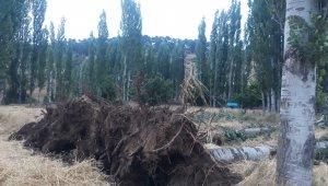 Selendi'de fırtına ağaçları devirdi elektrik tellerini kopardı