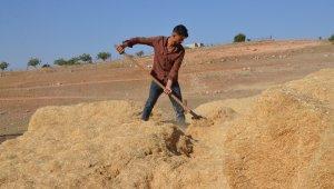 Siirt'te çiftçilerin kışa hazırlığı şimdiden başladı