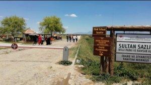Sultan Sazlığı'nda park yeri sorunu çözüm bekliyor