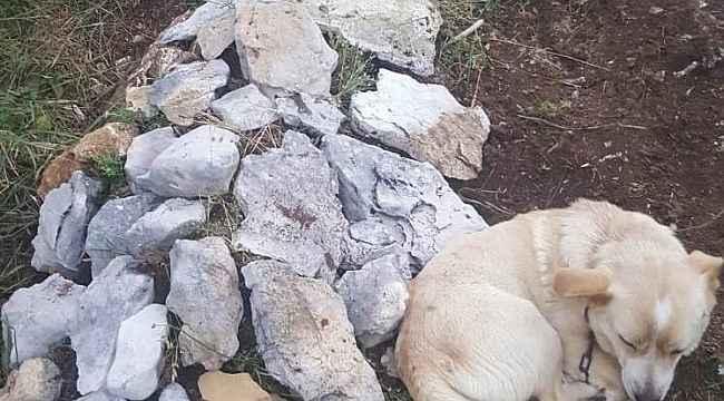 Zehirlenip ölen köpeğin mezarından bir an olsun ayrılmıyor