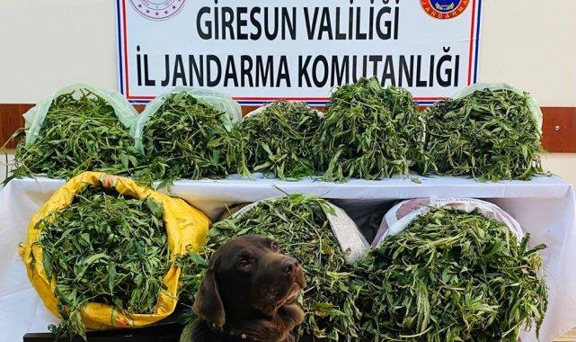 Giresun'da 26 kilogram kubar esrar yakalandı
