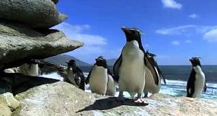 Sakar penguenler